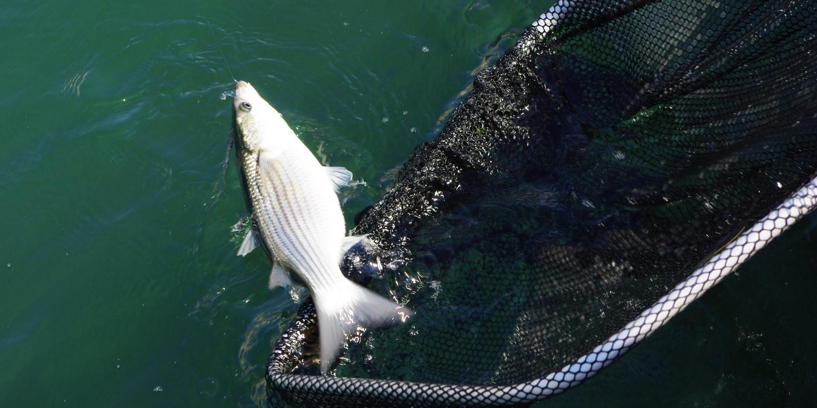 Les taquets sur la chasse à la pêche